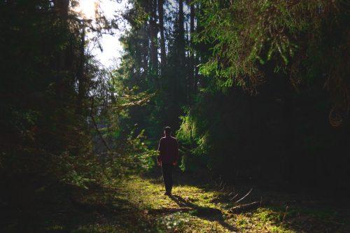 zgubiłeś się w lesie
