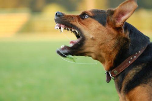 Jak się bronić przed agresywnym psem porady