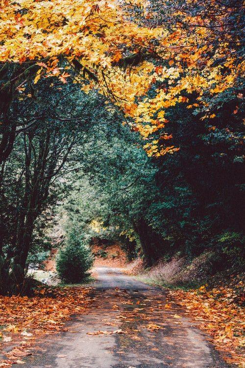 polecamy 6 miejsc, które warto odwiedzić jesienią