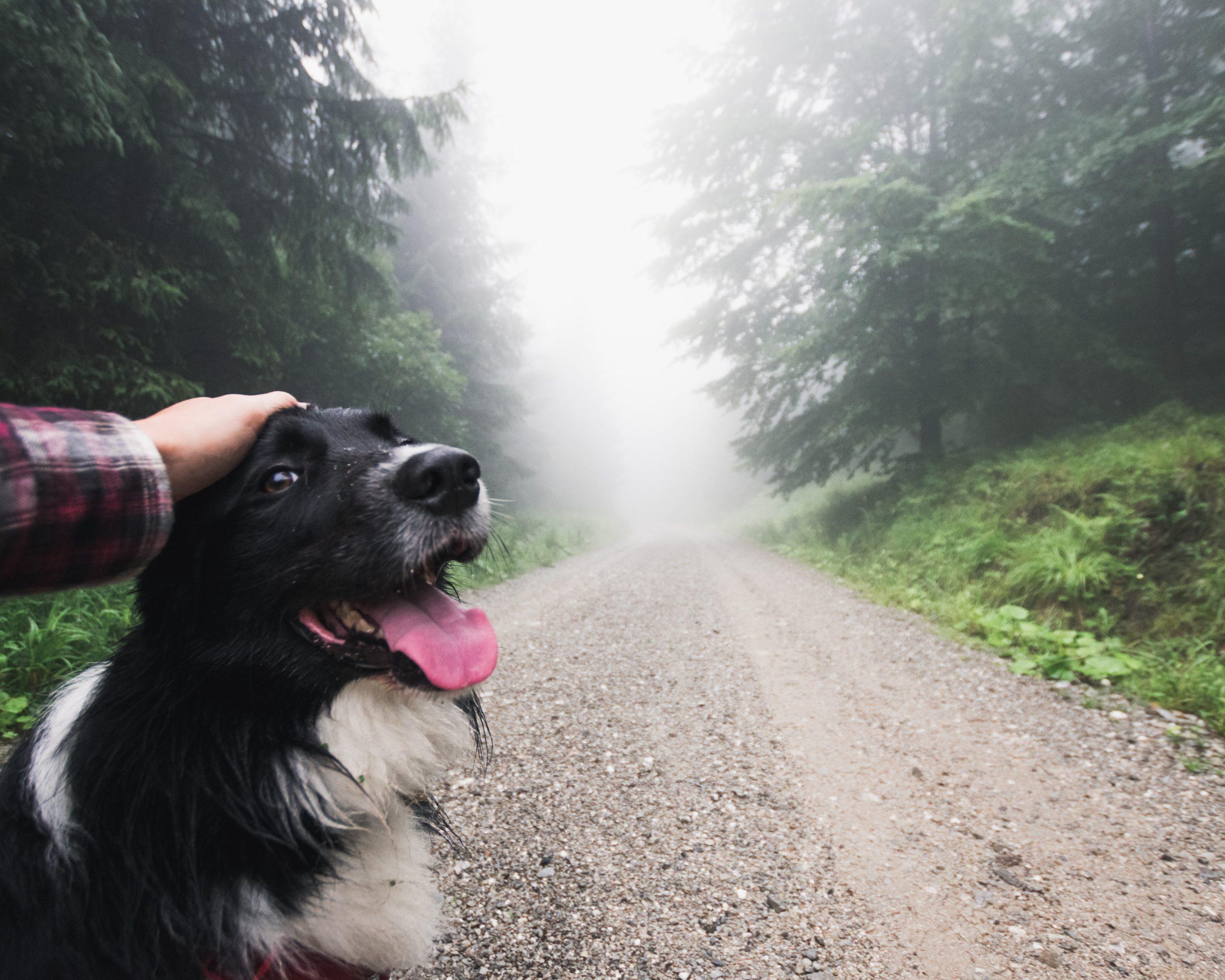 Na spacer z psem